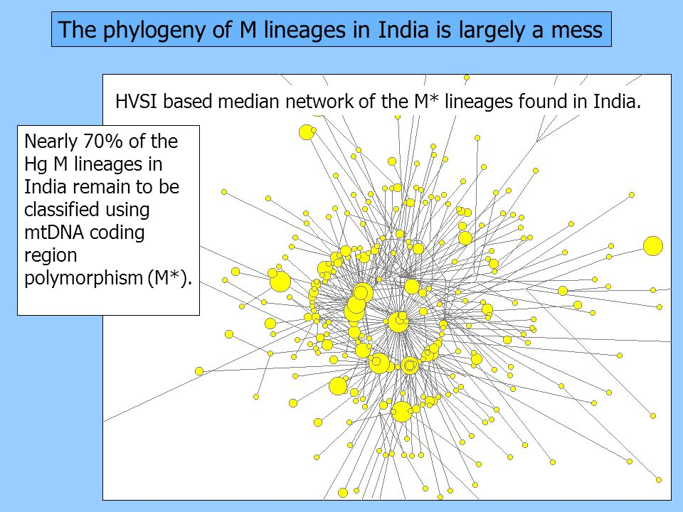 The phylogeny of M lineages in India is largely a mess Nearly 70% of the Hg M lineages in India remain to be classified using mtDNA coding region polymorphism (M*).