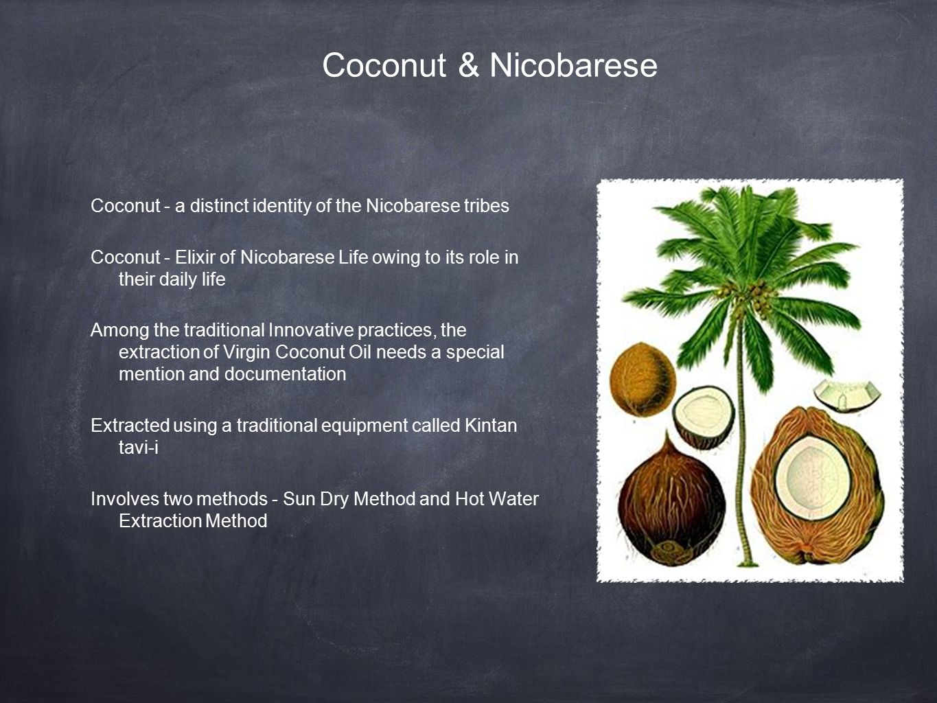 Coconut & Nicobarese Coconut - a distinct identity of the Nicobarese tribes Coconut - Elixir of Nicobarese Life owing to its role in their daily life Among the traditional Innovative practices, the extraction of Virgin Coconut Oil needs a special mention and documentation Extracted using a traditional equipment called Kintan tavi-i Involves two methods - Sun Dry Method and Hot Water Extraction Method
