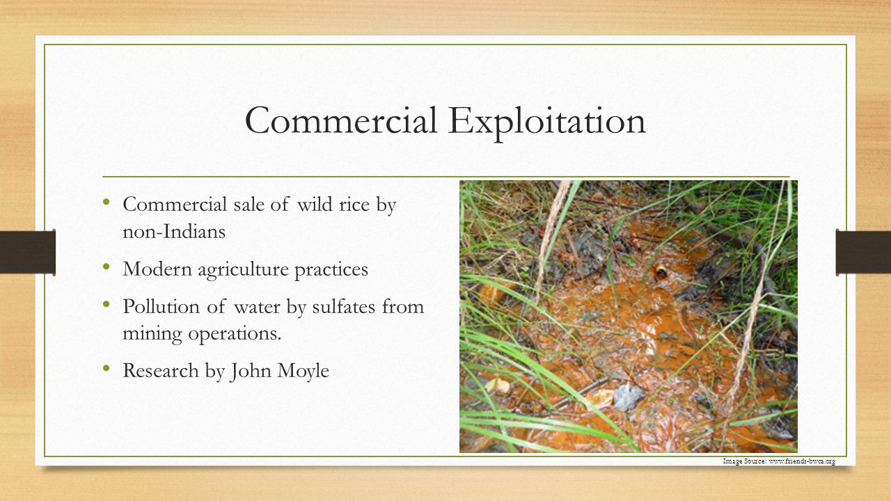 Commercial Exploitation Commercial sale of wild rice by non-Indians Modern agriculture practices Pollution of water by sulfates from mining operations.
