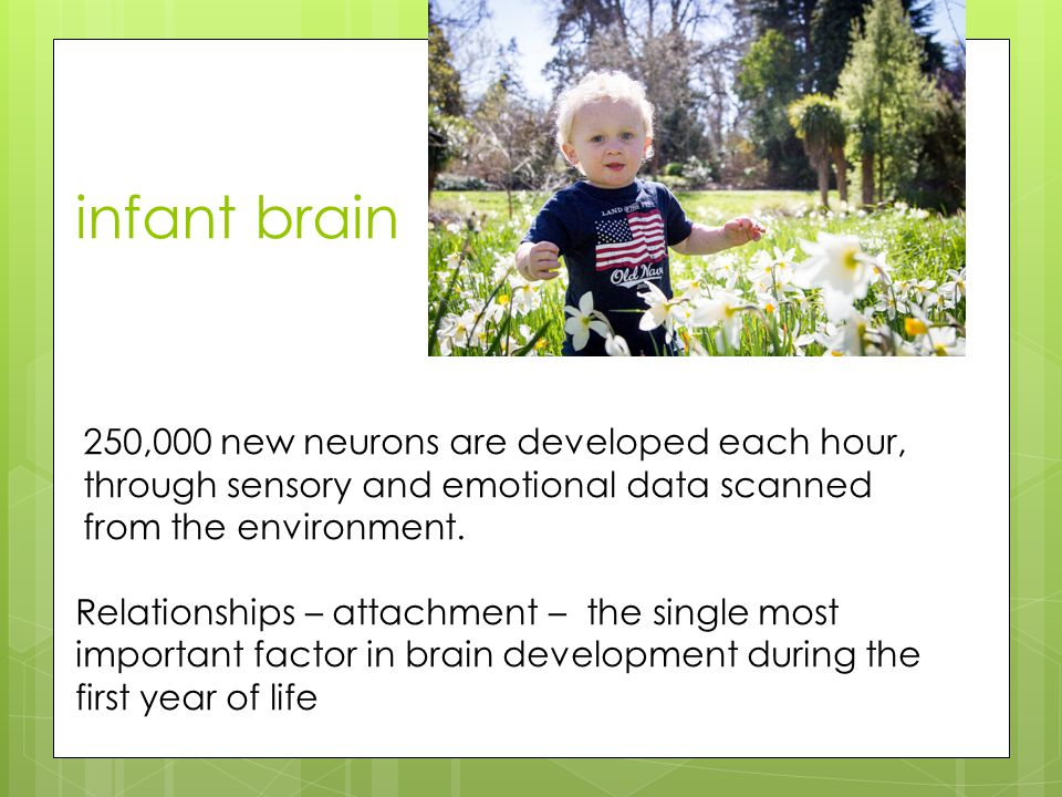 infant brain 250,000 new neurons are developed each hour, through sensory and emotional data scanned from the environment.