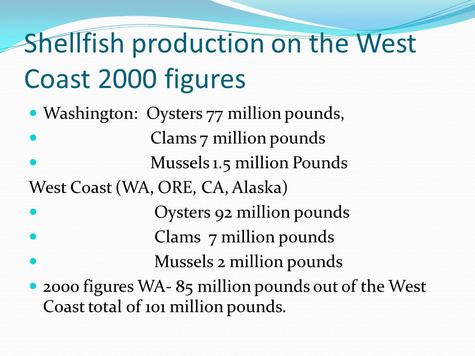 Shellfish production on the West Coast 2000 figures Washington: Oysters 77 million pounds, Clams 7 million pounds Mussels 1.5 million Pounds West Coast (WA, ORE, CA, Alaska) Oysters 92 million pounds Clams 7 million pounds Mussels 2 million pounds 2000 figures WA- 85 million pounds out of the West Coast total of 101 million pounds.