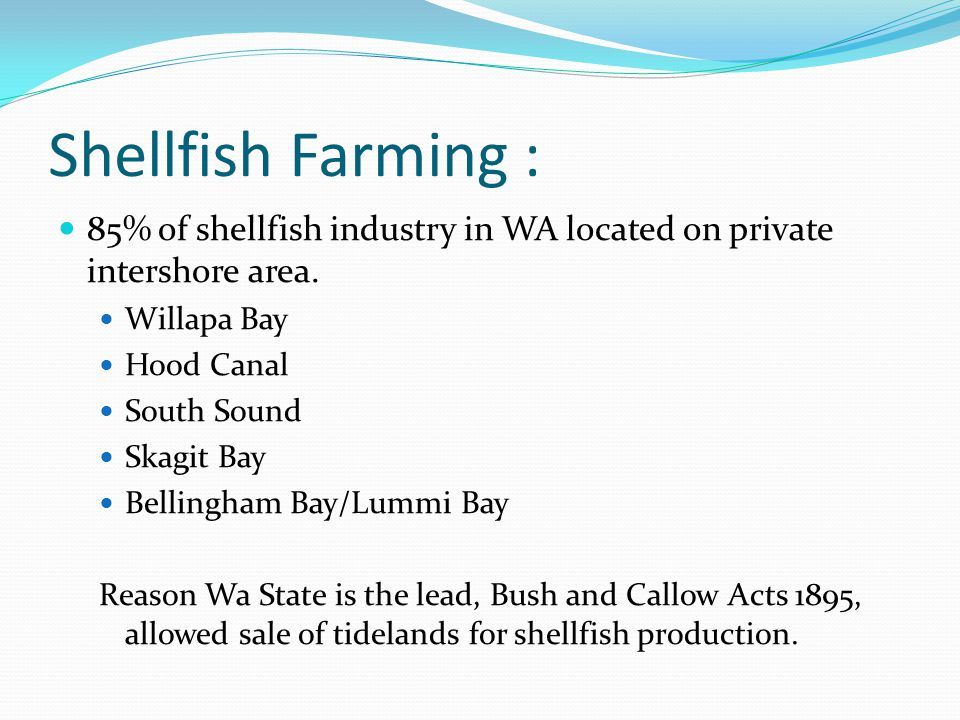 Shellfish Farming : 85% of shellfish industry in WA located on private intershore area.