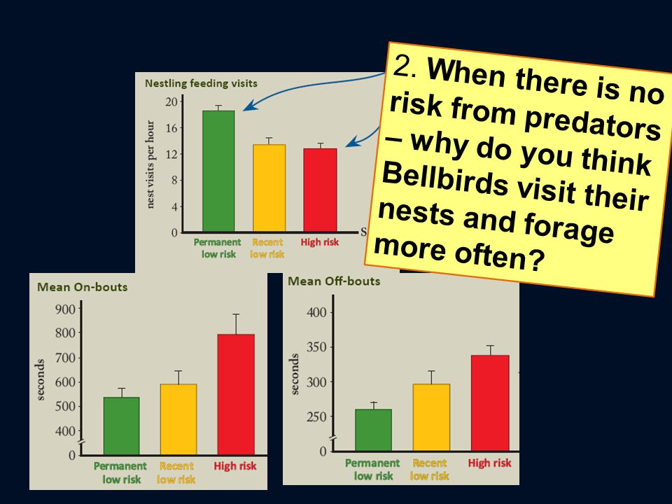2. When there is no risk from predators – why do you think Bellbirds visit their nests and forage more often?