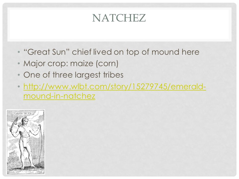 """NATCHEZ """"Great Sun"""" chief lived on top of mound here Major crop: maize (corn) One of three largest tribes http://www.wlbt.com/story/15279745/emerald-"""