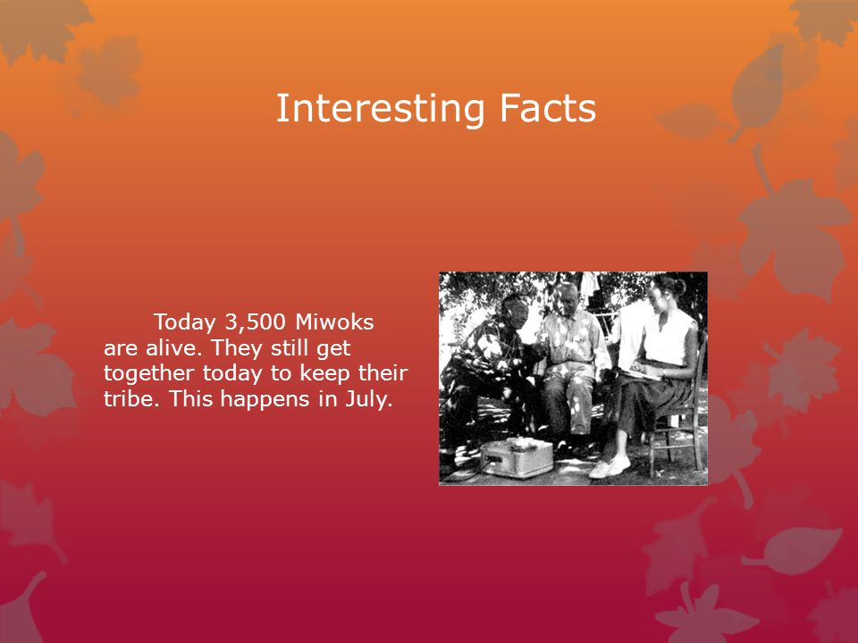 Interesting Facts Today 3,500 Miwoks are alive. They still get together today to keep their tribe. This happens in July.