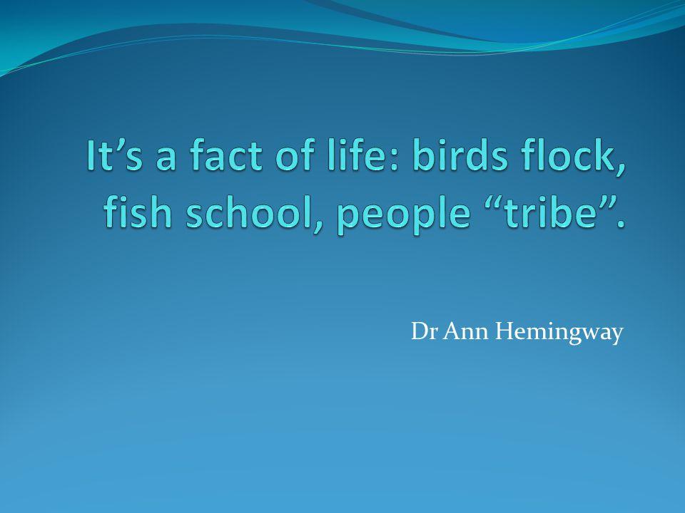 Dr Ann Hemingway