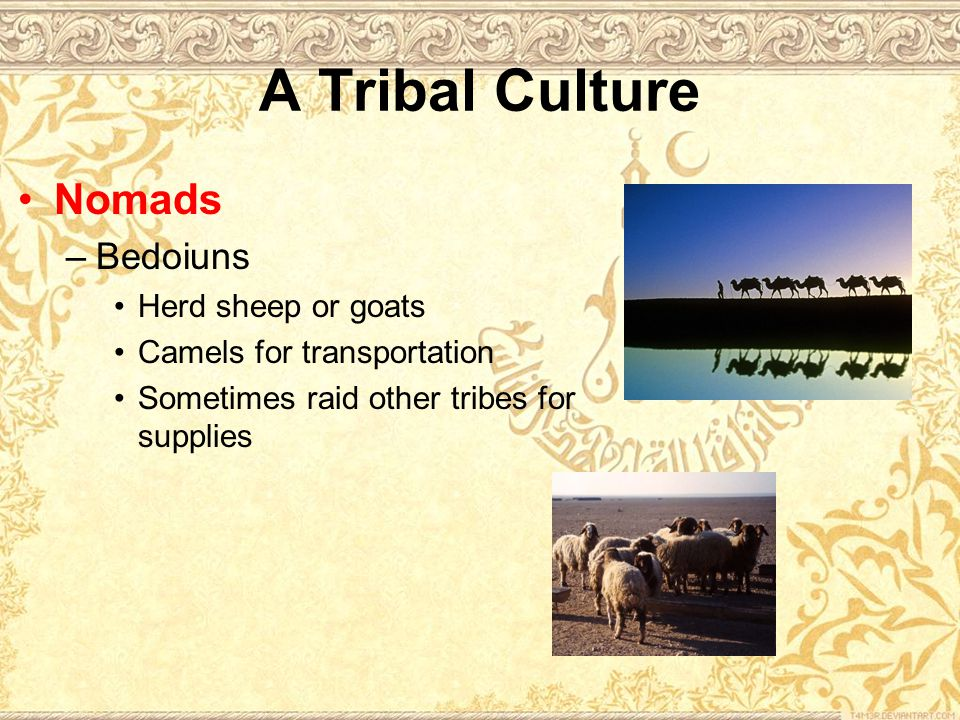 Nomads –Bedoiuns Herd sheep or goats Camels for transportation Sometimes raid other tribes for supplies