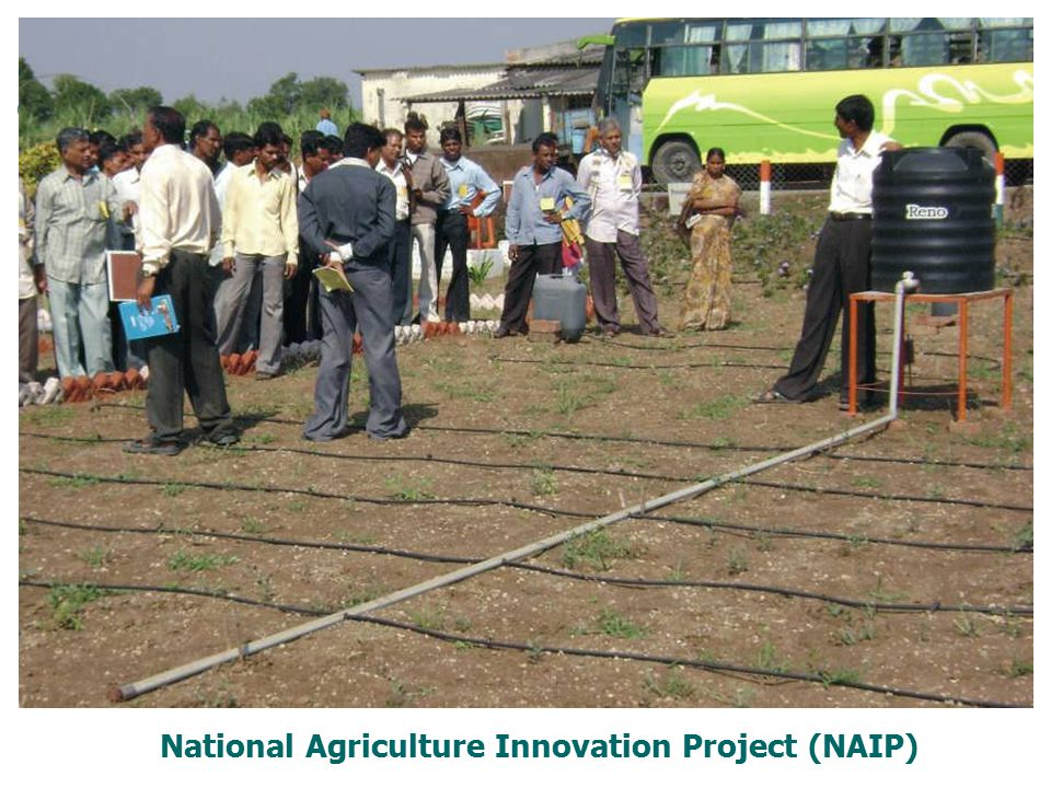 National Agriculture Innovation Project (NAIP)