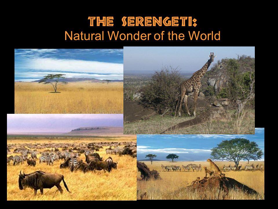 The Serengeti: Natural Wonder of the World