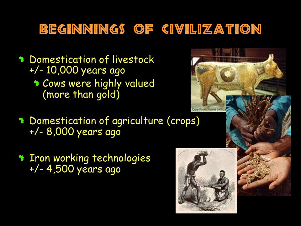 Beginnings of Civilization Domestication of livestock +/- 10,000 years ago Cows were highly valued (more than gold) Domestication of agriculture (crops) +/- 8,000 years ago Iron working technologies +/- 4,500 years ago