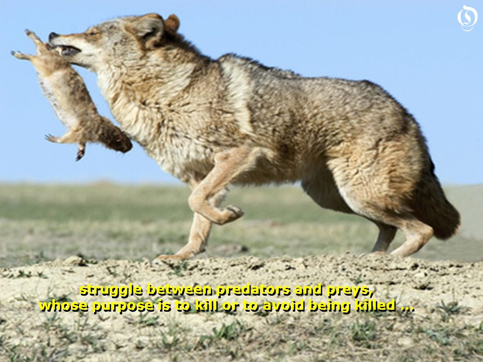struggle between predators and preys, whose purpose is to kill or to avoid being killed … struggle between predators and preys, whose purpose is to kill or to avoid being killed … O