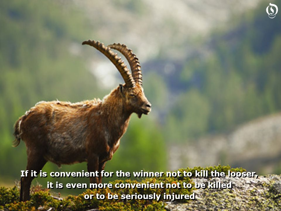 If it is convenient for the winner not to kill the looser, it is even more convenient not to be killed or to be seriously injured If it is convenient for the winner not to kill the looser, it is even more convenient not to be killed or to be seriously injured O