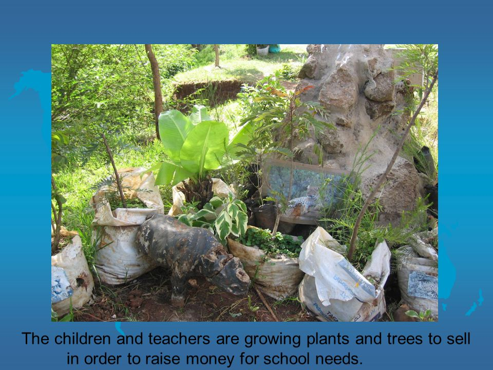 The children and teachers are growing plants and trees to sell in order to raise money for school needs.