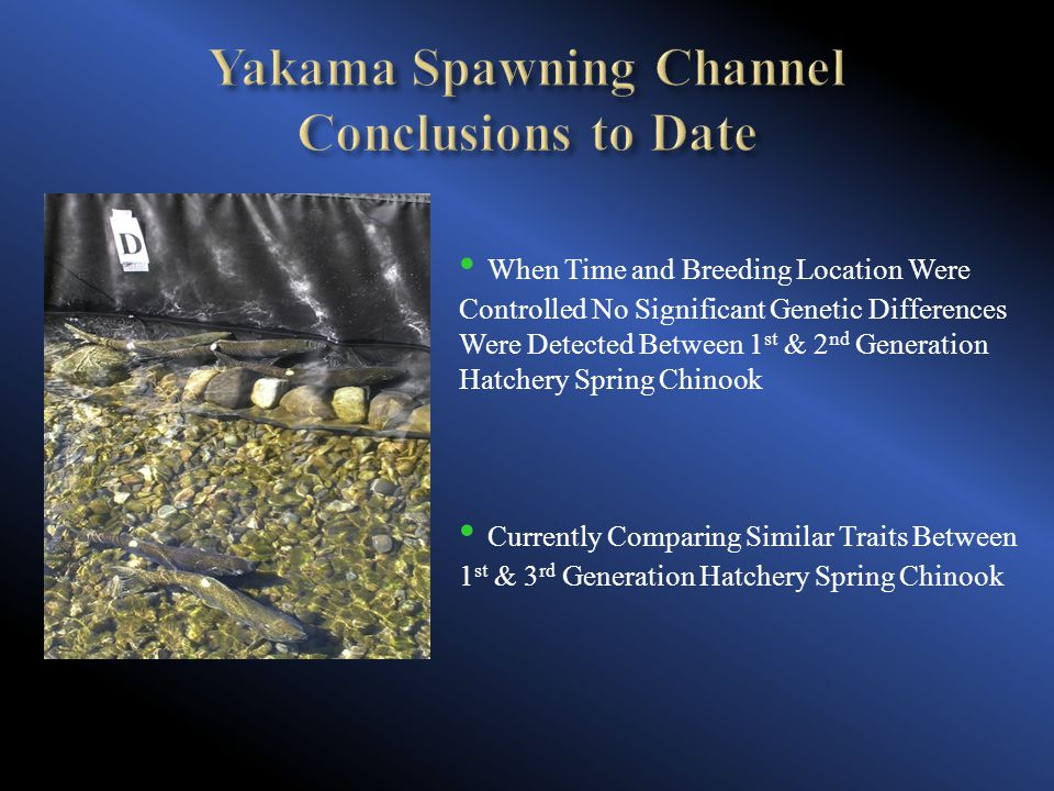 When Time and Breeding Location Were Controlled No Significant Genetic Differences Were Detected Between 1 st & 2 nd Generation Hatchery Spring Chinook Currently Comparing Similar Traits Between 1 st & 3 rd Generation Hatchery Spring Chinook