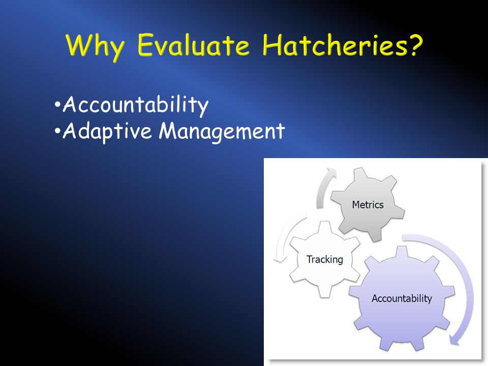 Accountability Adaptive Management
