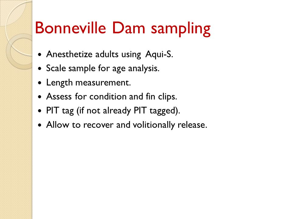 Bonneville Dam sampling Anesthetize adults using Aqui-S.