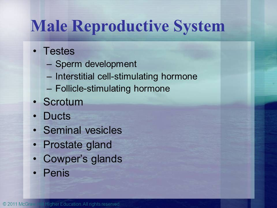 © 2011 McGraw-Hill Higher Education. All rights reserved. Male Reproductive System Testes –Sperm development –Interstitial cell-stimulating hormone –F