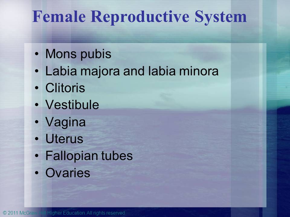 © 2011 McGraw-Hill Higher Education. All rights reserved. Female Reproductive System