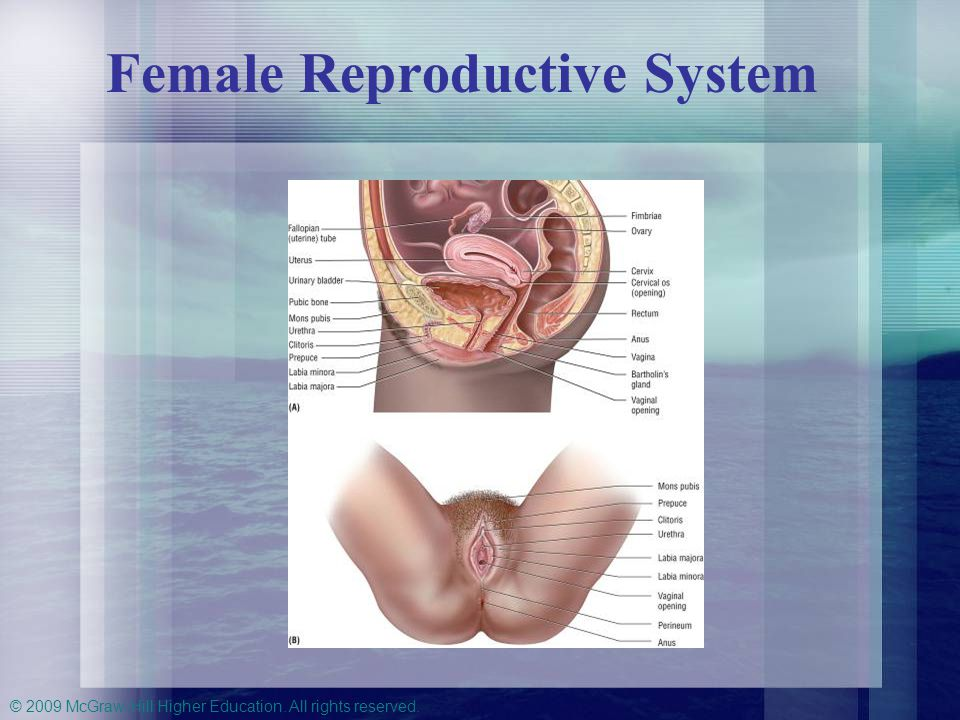 © 2009 McGraw-Hill Higher Education. All rights reserved. Female Reproductive System