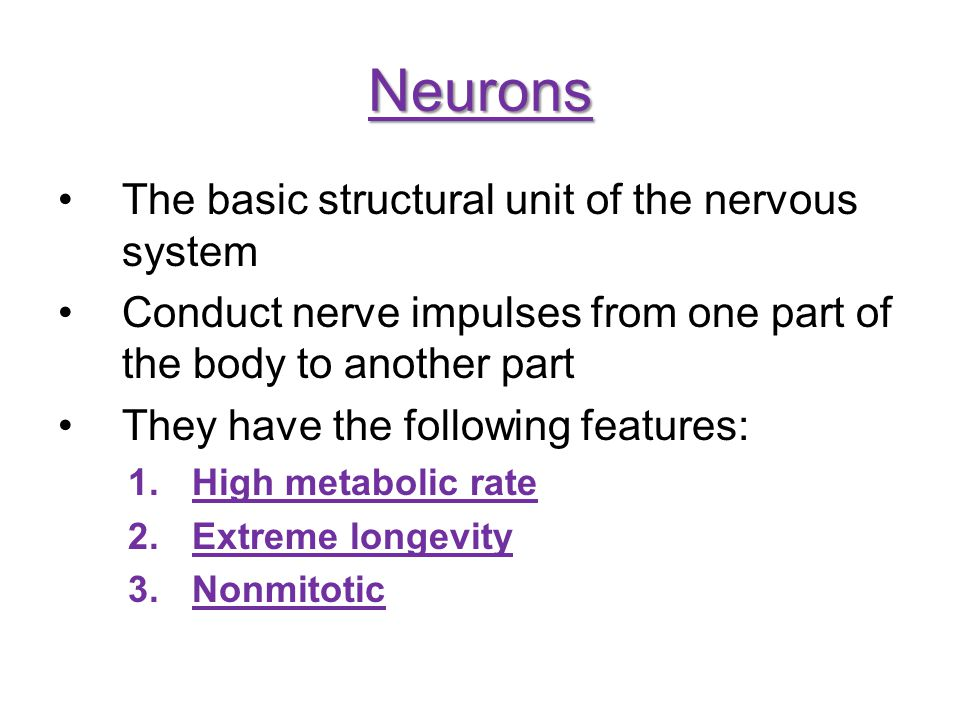Neurons The basic structural unit of the nervous system Conduct nerve impulses from one part of the body to another part They have the following featu