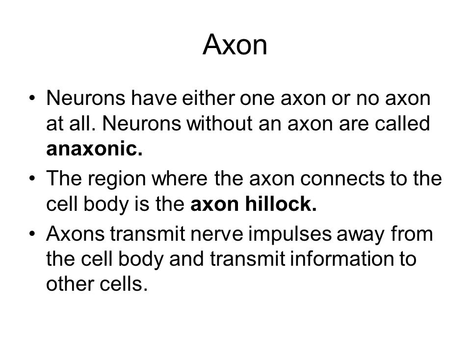 Axon Neurons have either one axon or no axon at all. Neurons without an axon are called anaxonic. The region where the axon connects to the cell body