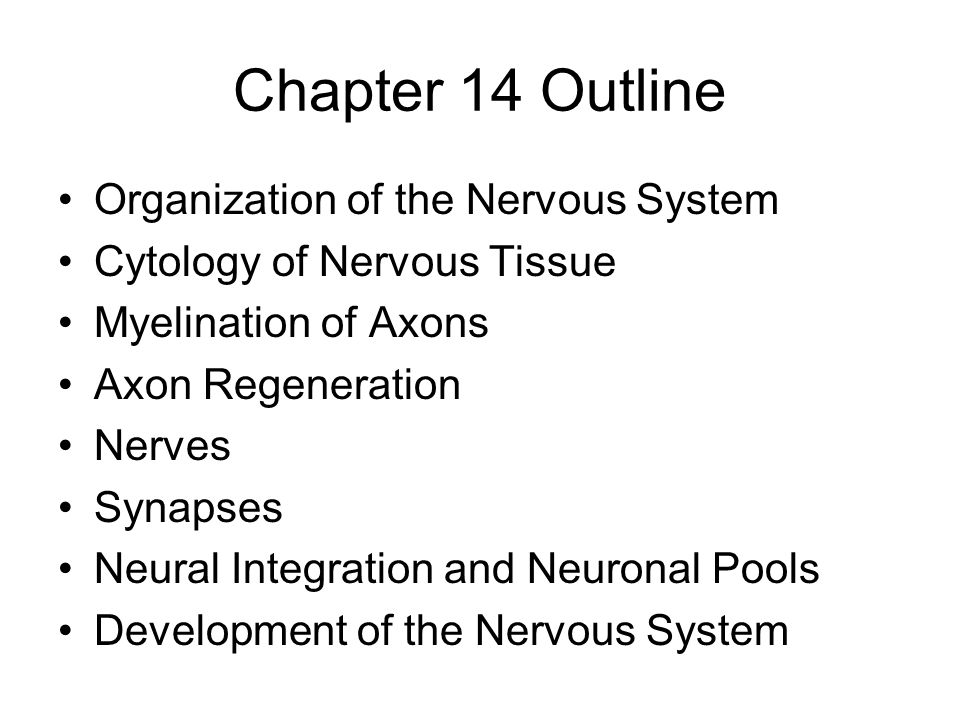 Structural Organization of the Nervous System Structurally, the nervous system is divided into two subdivisions: 1.