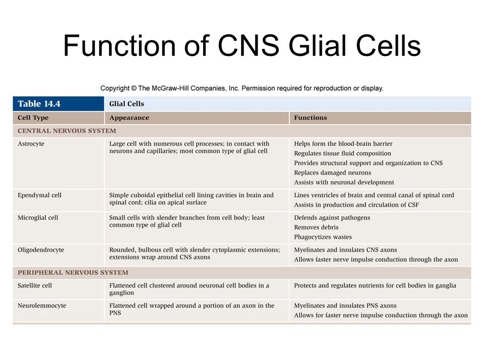 Function of CNS Glial Cells