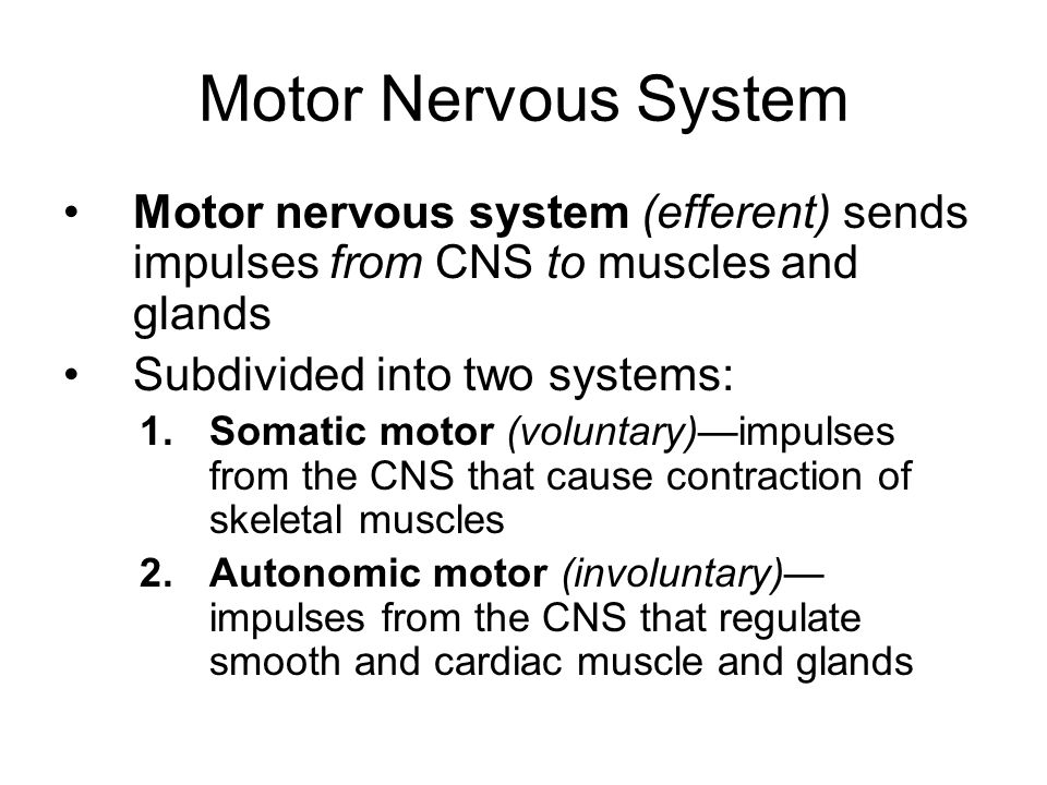 Functional Classification of Neurons Functionally, neurons are classified according to the direction that the nerve impulse is traveling relative to the CNS: 1.