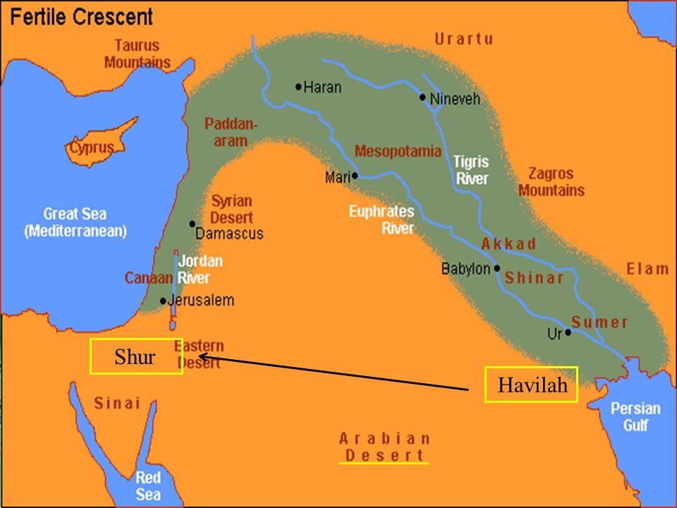 Havilah Shur