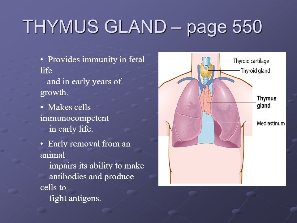 THYMUS GLAND – page 550 Provides immunity in fetal life and in early years of growth. Makes cells immunocompetent in early life. Early removal from an