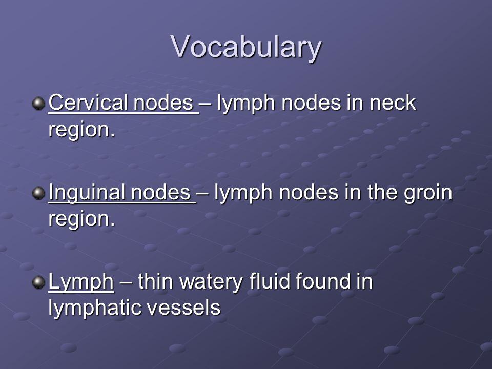 Vocabulary Cervical nodes – lymph nodes in neck region.