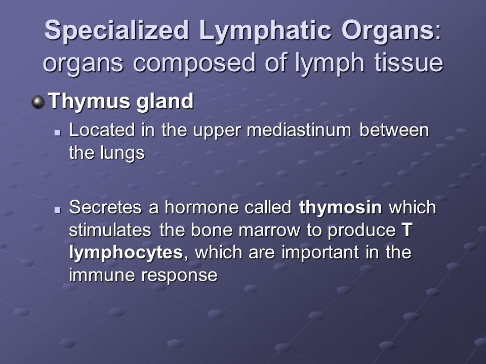 Specialized Lymphatic Organs: organs composed of lymph tissue Thymus gland Located in the upper mediastinum between the lungs Located in the upper mediastinum between the lungs Secretes a hormone called thymosin which stimulates the bone marrow to produce T lymphocytes, which are important in the immune response Secretes a hormone called thymosin which stimulates the bone marrow to produce T lymphocytes, which are important in the immune response