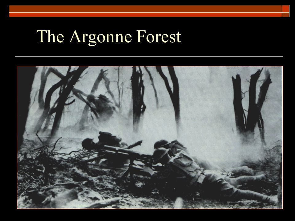The Argonne Forest