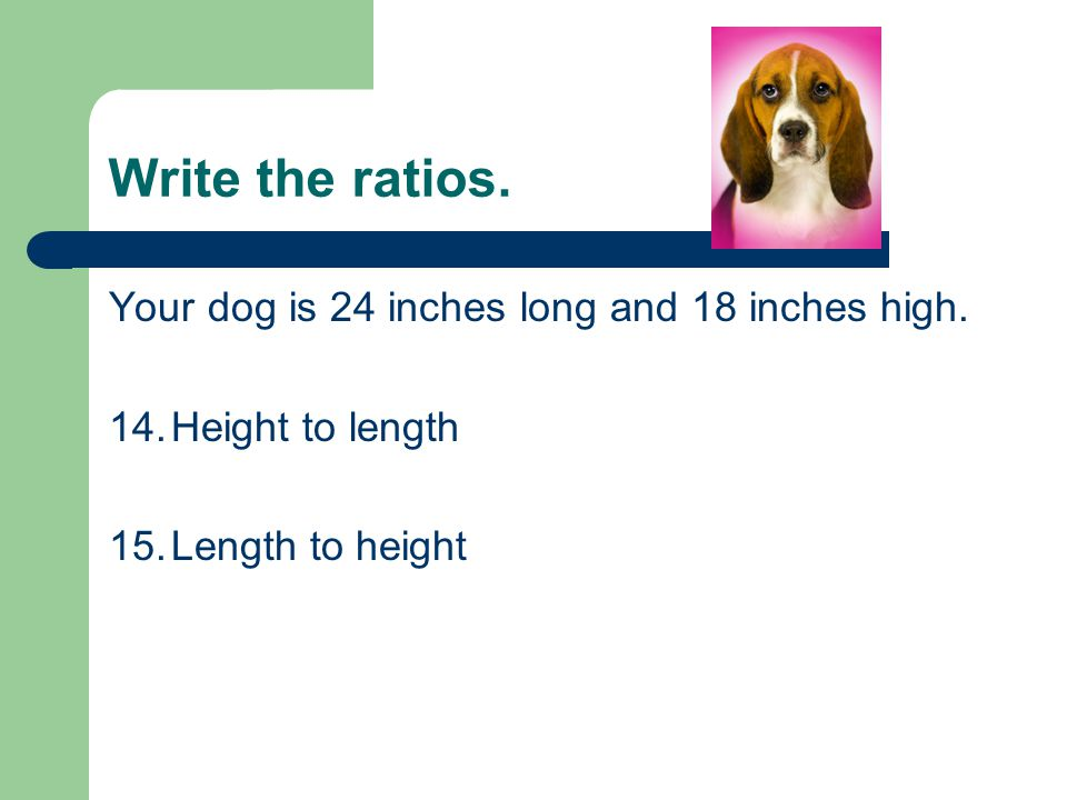 Write the ratios. Your dog is 24 inches long and 18 inches high.