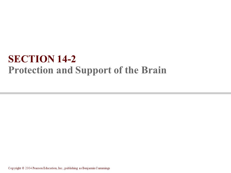 Copyright © 2004 Pearson Education, Inc., publishing as Benjamin Cummings SECTION 14-2 Protection and Support of the Brain