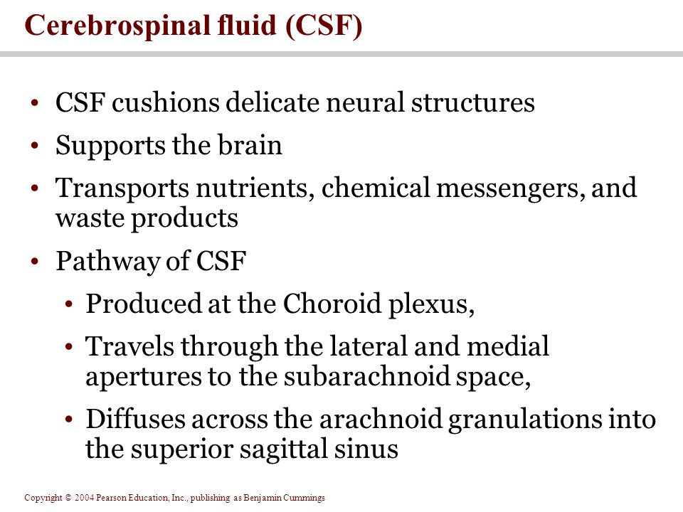 Copyright © 2004 Pearson Education, Inc., publishing as Benjamin Cummings CSF cushions delicate neural structures Supports the brain Transports nutrients, chemical messengers, and waste products Pathway of CSF Produced at the Choroid plexus, Travels through the lateral and medial apertures to the subarachnoid space, Diffuses across the arachnoid granulations into the superior sagittal sinus Cerebrospinal fluid (CSF)
