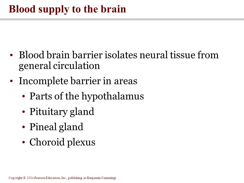 Copyright © 2004 Pearson Education, Inc., publishing as Benjamin Cummings Blood brain barrier isolates neural tissue from general circulation Incomplete barrier in areas Parts of the hypothalamus Pituitary gland Pineal gland Choroid plexus Blood supply to the brain