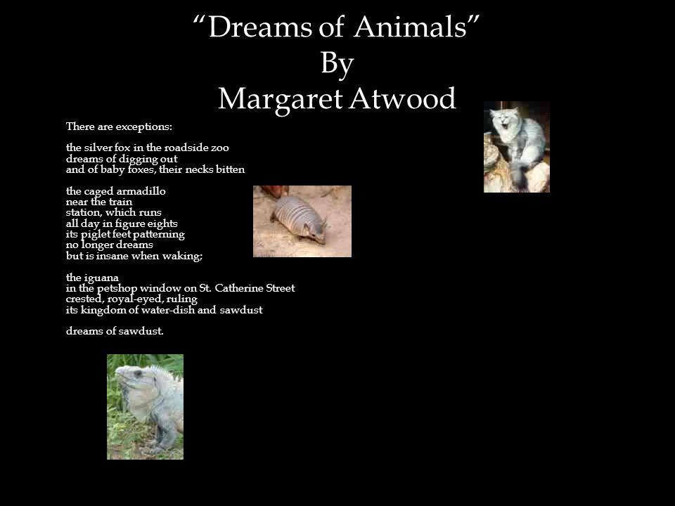 1,2 Dreams of Animals By Margaret Atwood There are exceptions: the silver fox in the roadside zoo dreams of digging out and of baby foxes, their necks bitten the caged armadillo near the train station, which runs all day in figure eights its piglet feet patterning no longer dreams but is insane when waking; the iguana in the petshop window on St.