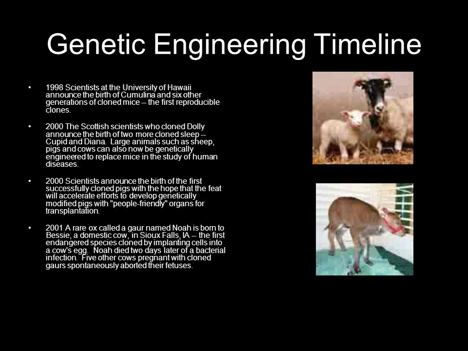 1,2 Genetic Engineering Timeline 1998 Scientists at the University of Hawaii announce the birth of Cumulina and six other generations of cloned mice -- the first reproducible clones.