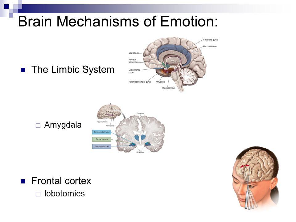 10 Brain Mechanisms of Emotion: The Limbic System  Amygdala Frontal cortex  lobotomies