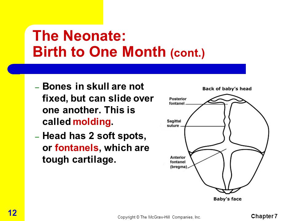 Copyright © The McGraw-Hill Companies, Inc. Chapter 7 11 The Neonate: Birth to One Month Physical Development – weight usually 7 to 9 pounds, and leng