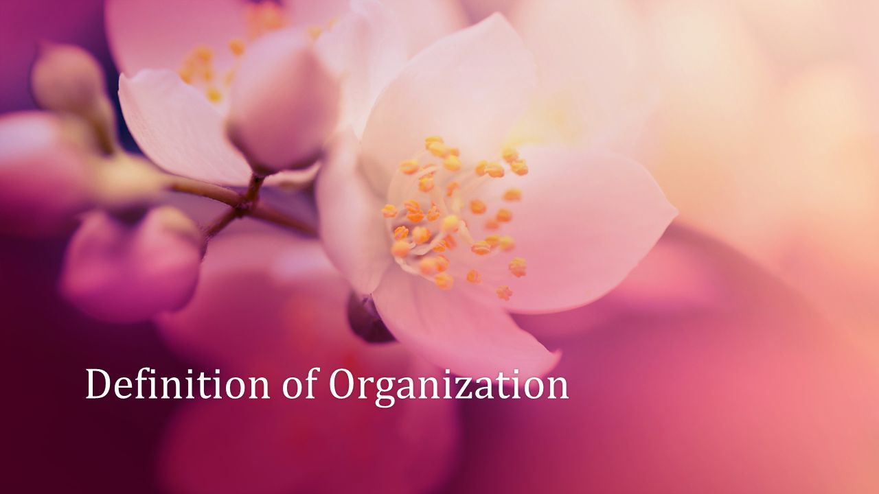 Organization An Organization is a social unit or human grouping deliberately structured for the purpose of attaining specific goals .