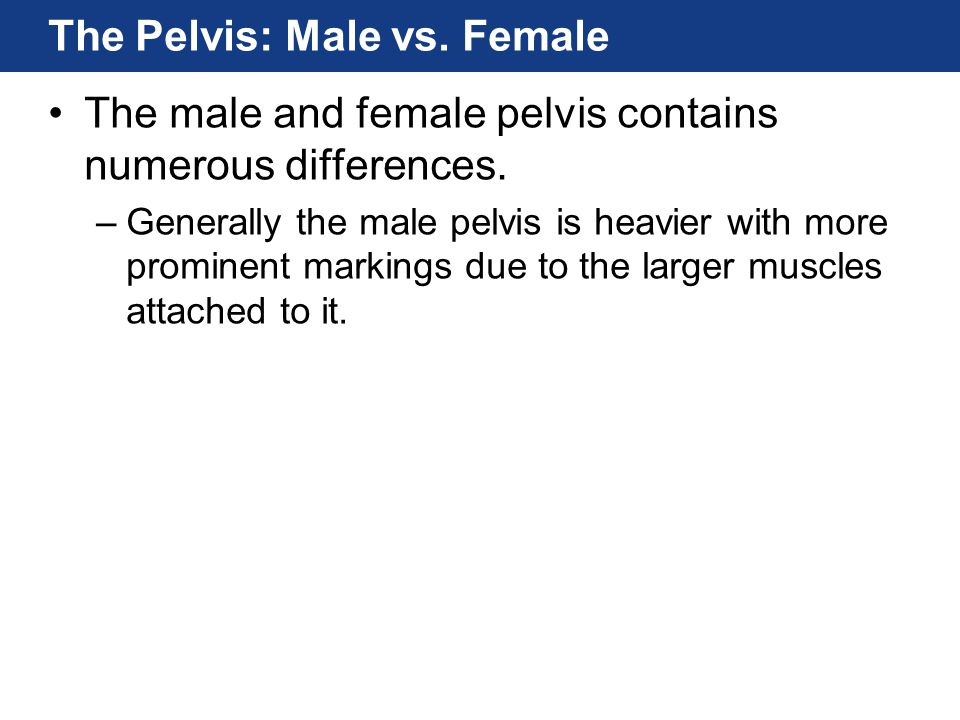The Pelvis: Male vs. Female The male and female pelvis contains numerous differences. –Generally the male pelvis is heavier with more prominent markin