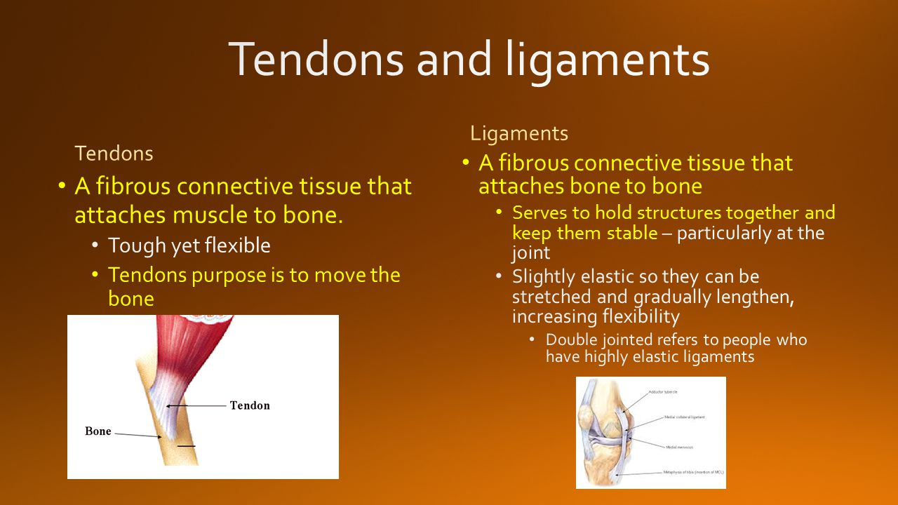 A fibrous connective tissue that attaches muscle to bone. Tough yet flexible Tendons purpose is to move the bone A fibrous connective tissue that atta