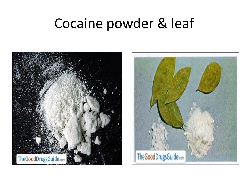 Cocaine powder & leaf