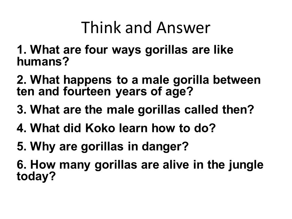 Think and Answer 1. What are four ways gorillas are like humans? 2. What happens to a male gorilla between ten and fourteen years of age? 3. What are