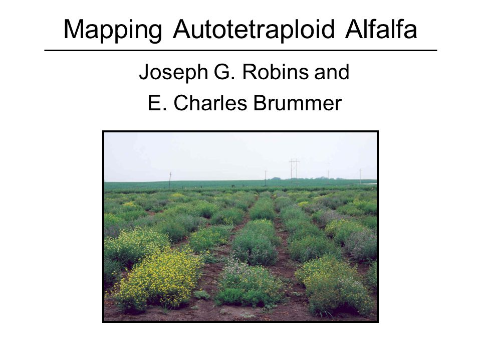 Mapping Autotetraploid Alfalfa Joseph G. Robins and E. Charles Brummer