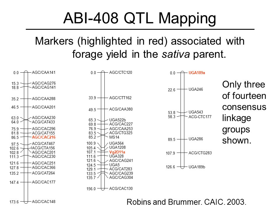 ABI-408 QTL Mapping Markers (highlighted in red) associated with forage yield in the sativa parent.