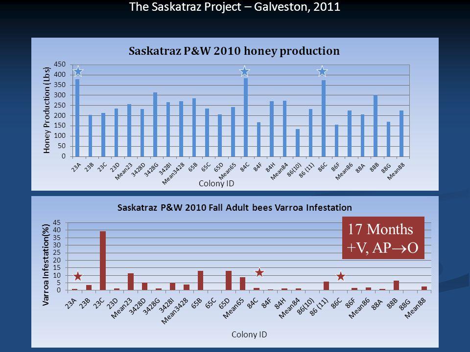 The Saskatraz Project – Galveston, 2011 17 Months +V, AP  O