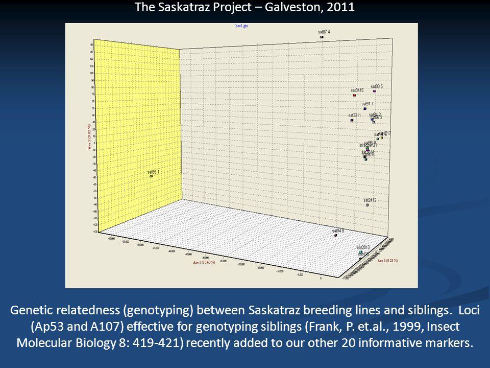 The Saskatraz Project – Galveston, 2011 Genetic relatedness (genotyping) between Saskatraz breeding lines and siblings. Loci (Ap53 and A107) effective